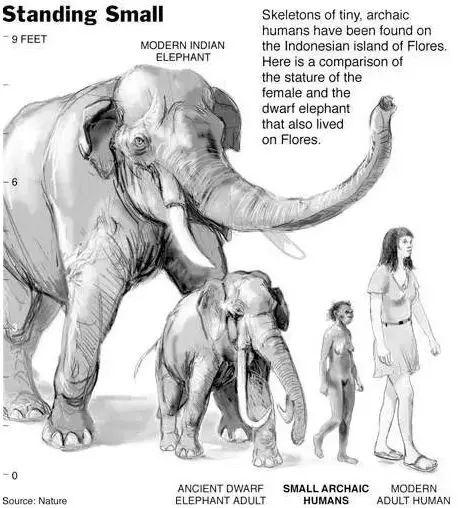 Tại sao những loài động vật trên các hòn đảo luôn kỳ dị hơn những người anh em trên đất liền? - Ảnh 9.