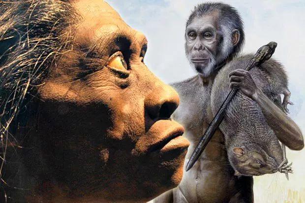 Tại sao những loài động vật trên các hòn đảo luôn kỳ dị hơn những người anh em trên đất liền? - Ảnh 11.