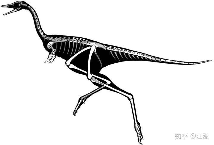 Phát hiện loài động vật hai ngón chuyên ăn cắp trứng khủng long - Ảnh 6.
