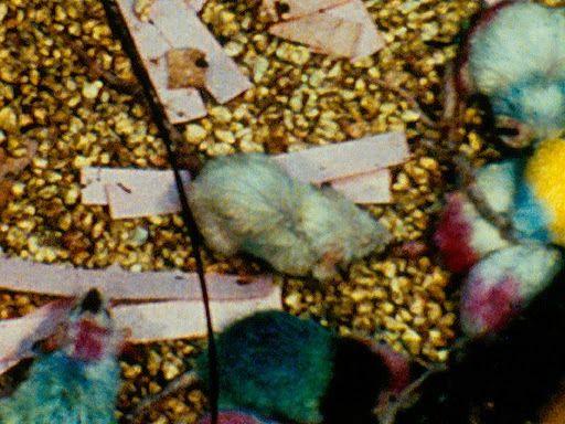 Thiên đường chuột: thí nghiệm về một xã hội thu nhỏ vẽ ra những kết luận rùng rợn về tương lai con người (Phần 1) - Ảnh 6.