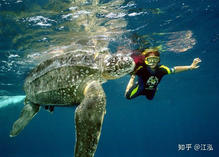 Phát hiện loài rùa biển cổ đại còn to lớn hơn cả một cái ô tô - Ảnh 3.
