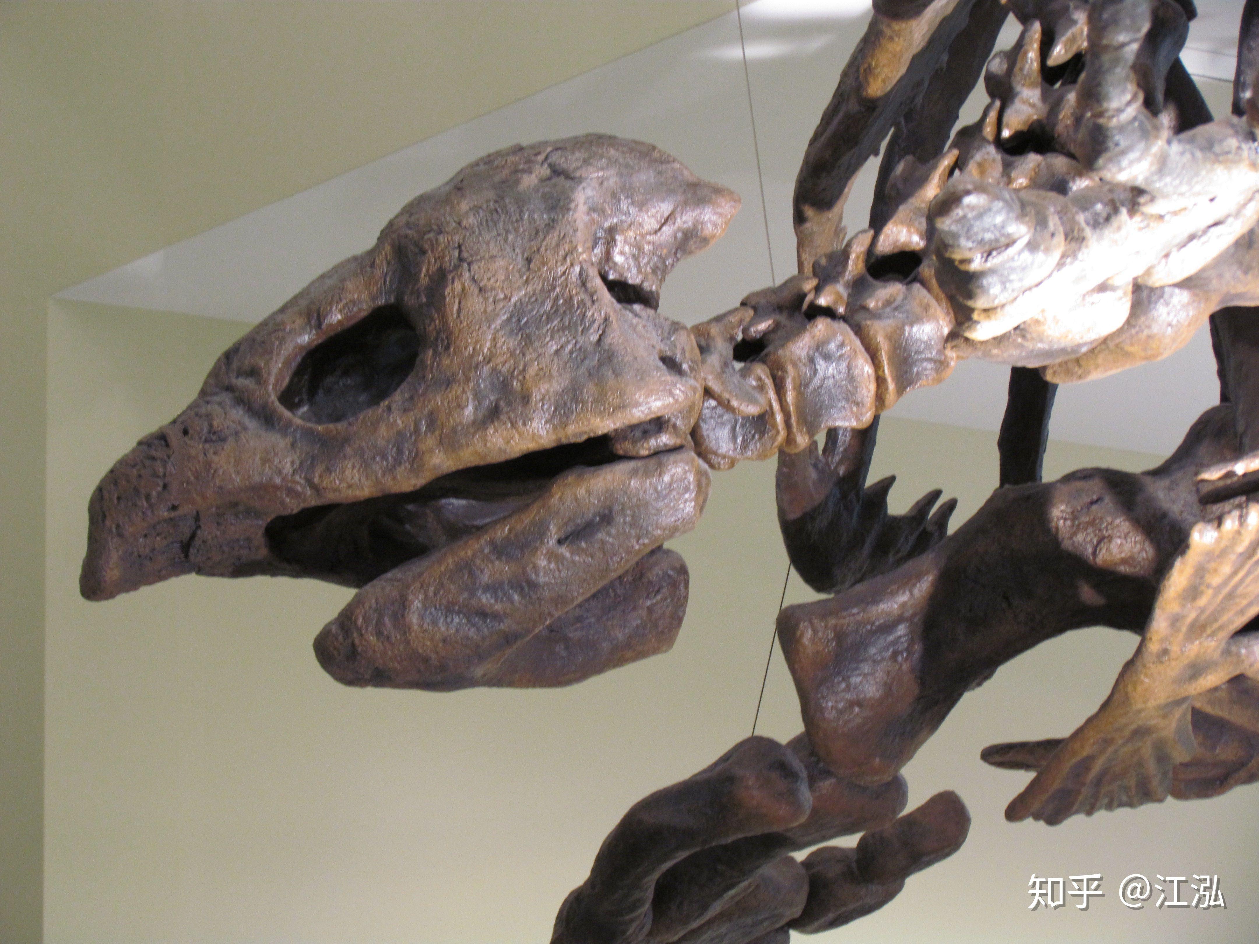 Phát hiện loài rùa biển cổ đại còn to lớn hơn cả một cái ô tô - Ảnh 5.