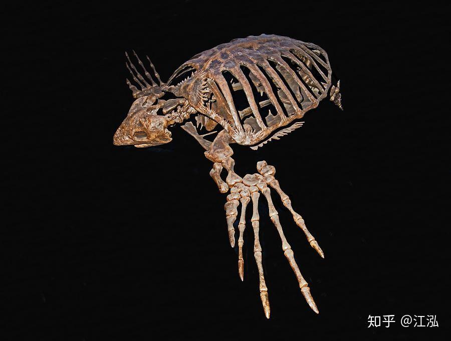Phát hiện loài rùa biển cổ đại còn to lớn hơn cả một cái ô tô - Ảnh 6.