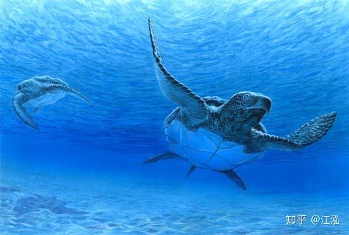 Phát hiện loài rùa biển cổ đại còn to lớn hơn cả một cái ô tô - Ảnh 7.