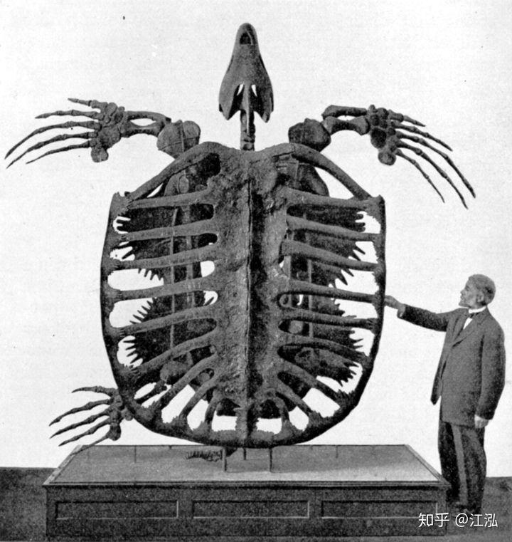 Phát hiện loài rùa biển cổ đại còn to lớn hơn cả một cái ô tô - Ảnh 1.