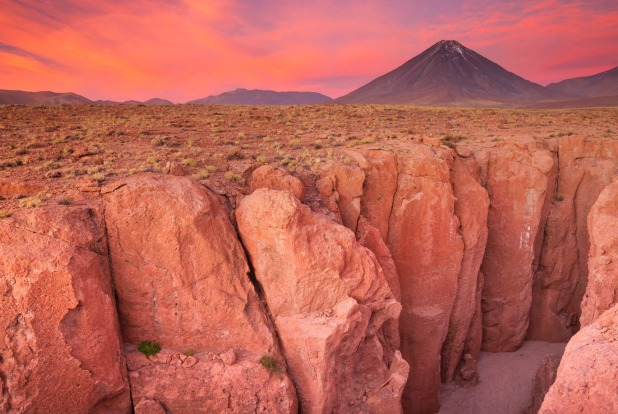 Bí ẩn xác ướp của những con vẹt rừng nhiệt đới bên dưới sa mạc Atacama - Ảnh 1.