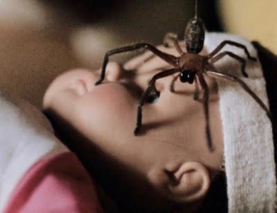 Cứ gặp nhện là đánh – Liệu chúng ta có nên giết những con nhện nhà hay không? - Ảnh 4.