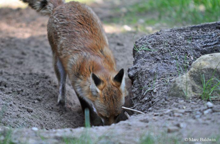 Có thể bạn chưa biết, động vật cũng biết tổ chức đám tang cho cái chết của đồng loại - Ảnh 6.