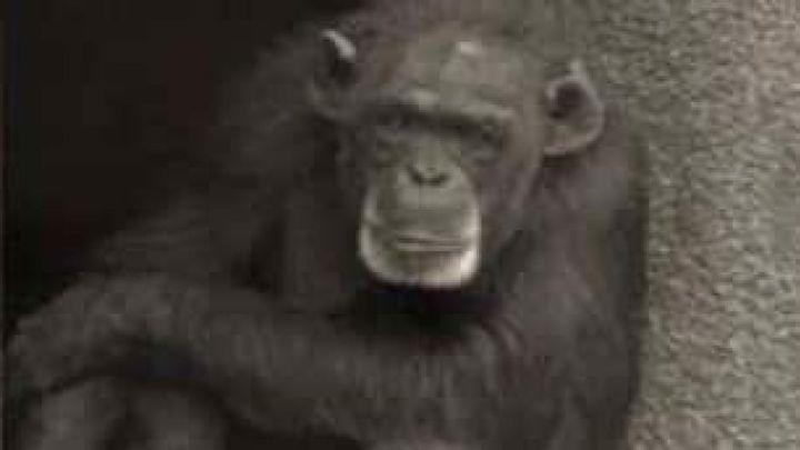 Có thể bạn chưa biết, động vật cũng biết tổ chức đám tang cho cái chết của đồng loại - Ảnh 5.