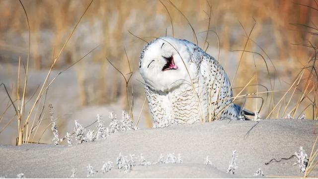 Ngoài con người, các loài động vật khác có biết cười hay không? - Ảnh 1.