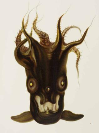 Vampyroteuthis infernalis: Loài ma cà rồng dưới đáy biển sâu - Ảnh 1.