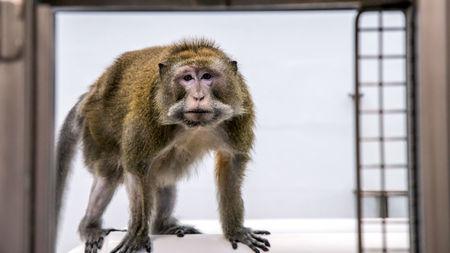 Đại dịch COVID-19 khiến Trung Quốc hết sạch khỉ để thí nghiệm - Ảnh 4.