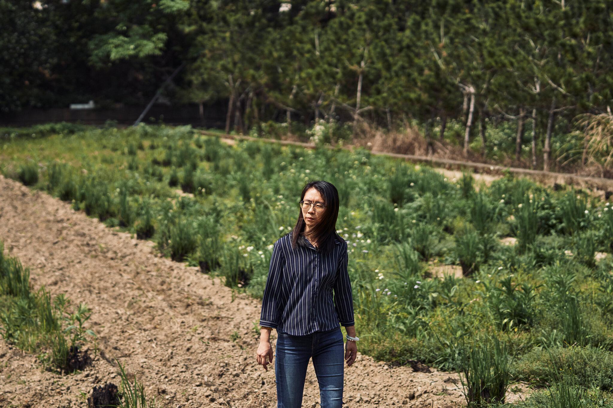 Chọn chip hay chọn lúa: Câu hỏi đang khiến Đài Loan phải đau đầu - Ảnh 6.