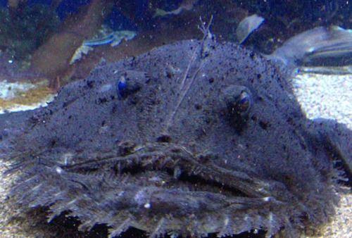 Khi cá mập tiến hóa để sống dưới đáy biển, chúng sẽ như thế nào? - Ảnh 3.