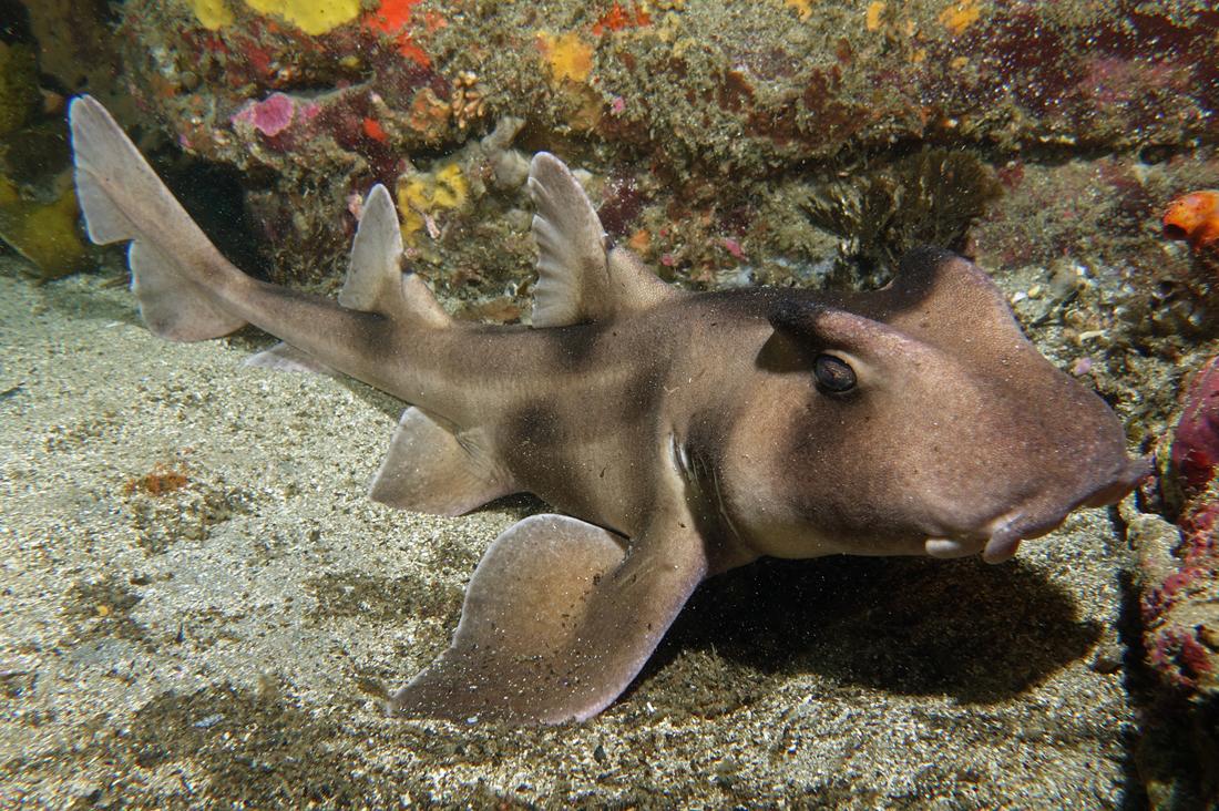 Khi cá mập tiến hóa để sống dưới đáy biển, chúng sẽ như thế nào? - Ảnh 12.