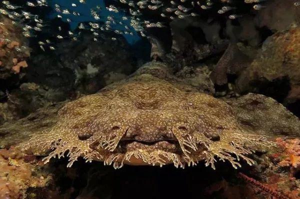 Khi cá mập tiến hóa để sống dưới đáy biển, chúng sẽ như thế nào? - Ảnh 1.