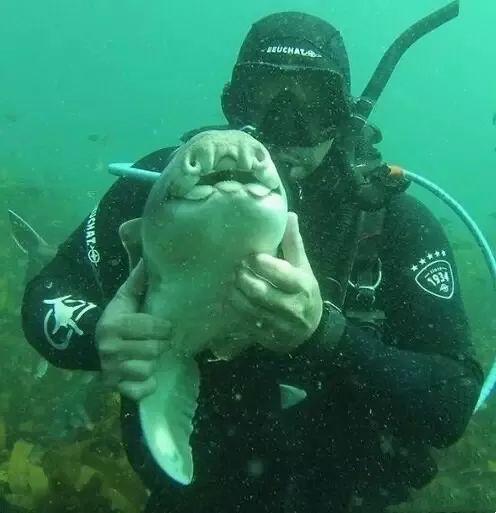 Khi cá mập tiến hóa để sống dưới đáy biển, chúng sẽ như thế nào? - Ảnh 13.