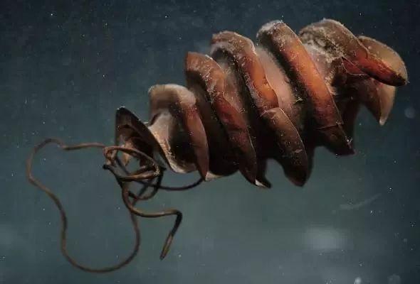 Khi cá mập tiến hóa để sống dưới đáy biển, chúng sẽ như thế nào? - Ảnh 15.