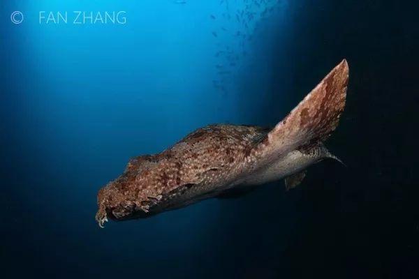 Khi cá mập tiến hóa để sống dưới đáy biển, chúng sẽ như thế nào? - Ảnh 6.