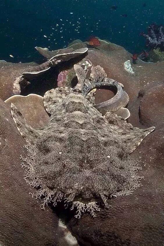 Khi cá mập tiến hóa để sống dưới đáy biển, chúng sẽ như thế nào? - Ảnh 8.