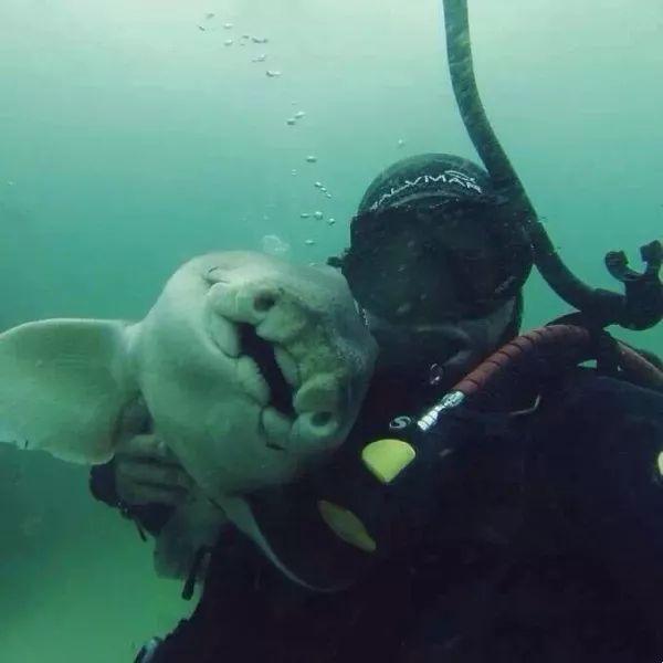 Khi cá mập tiến hóa để sống dưới đáy biển, chúng sẽ như thế nào? - Ảnh 14.