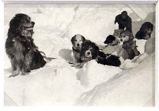 Cuộc phiêu lưu ở Nam Cực của một chú mèo mang tên Chippy - Ảnh 3.
