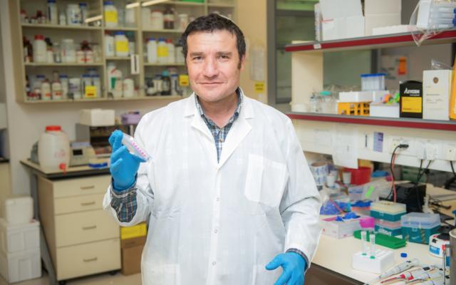 Các nhà nghiên cứu Israel tăng thành công tuổi thọ trung bình của chuột thí nghiệm lên 23%, nhận định có thể ứng dụng lên người - Ảnh 2.