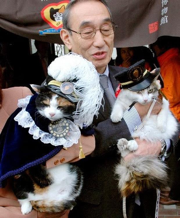 Chỉ nhờ một cô mèo hoang, công ty Nhật Bản lãi to 280 tỷ, thoát khỏi cảnh phá sản trong gang tấc - Ảnh 6.