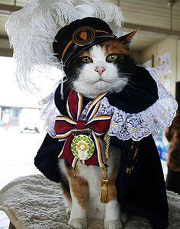 Chỉ nhờ một cô mèo hoang, công ty Nhật Bản lãi to 280 tỷ, thoát khỏi cảnh phá sản trong gang tấc - Ảnh 7.