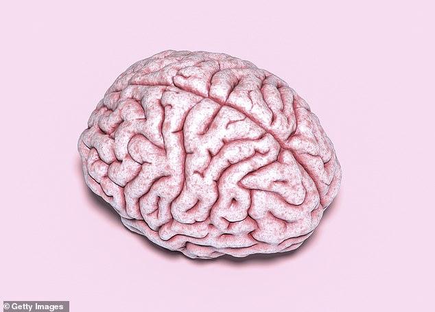 Não bộ và tinh hoàn có điểm chung gì? Một nghiên cứu mới tìm thấy sự tương đồng đáng ngạc nhiên giữa chúng - Ảnh 1.