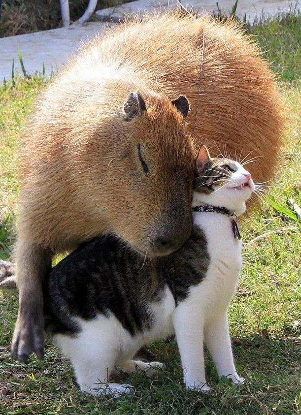Loài chuột khổng lồ to như con người nhưng não thì bé tí này từng thống trị Brazil thời tiền sử - Ảnh 1.