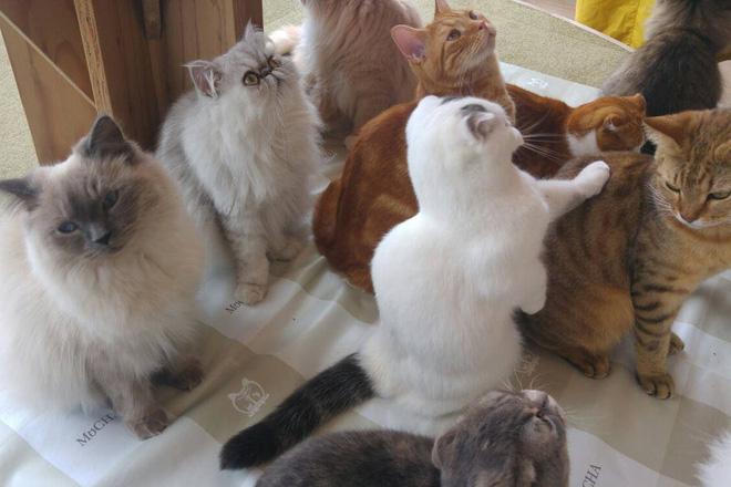 Đây là cách kiểm tra con mèo nhà bạn có biết tên bạn đặt cho nó hay không - Ảnh 3.