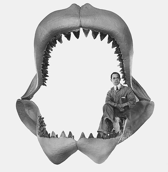 Lẽ nào siêu cá mập Megalodon vẫn đang còn sống dưới đại dương sâu thẳm? - Ảnh 2.