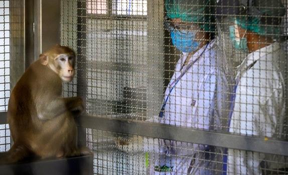 Trung Quốc lại báo cáo một virus lây từ khỉ sang người, nạn nhân đầu tiên đã tử vong - Ảnh 5.