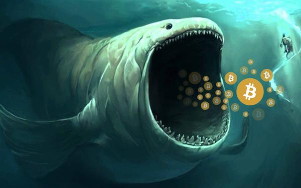 Cá voi Bitcoin thức giấc sau 3 năm, gom hàng ồ ạt - Ảnh 2.