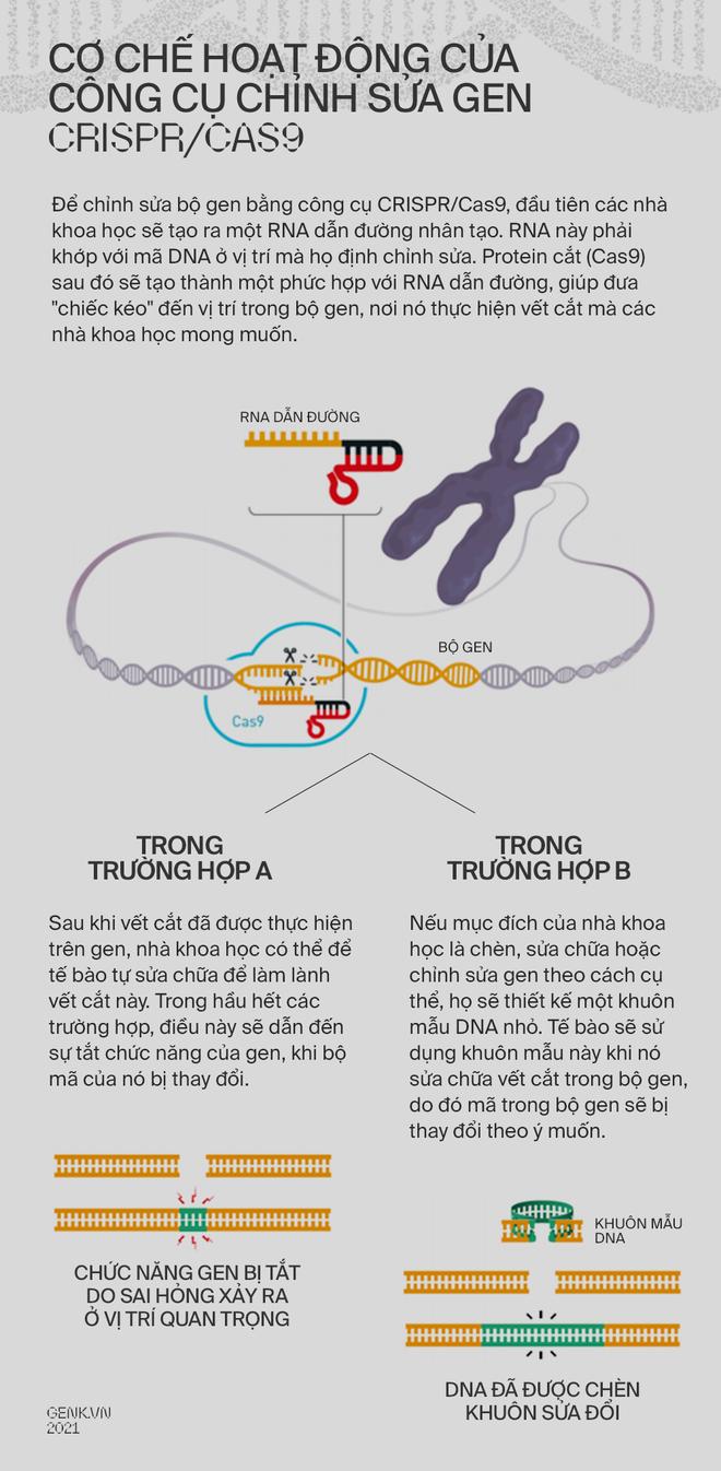 Một cấu trúc DNA giống với loài Borg trong Star Trek vừa được các nhà khoa học tìm thấy - Ảnh 4.