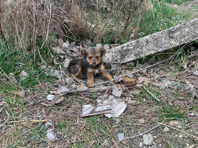May mắn thay một chú chó con đang hấp hối ngoài bãi rác bỗng được người đàn ông tốt bụng cứu sống - Ảnh 4.