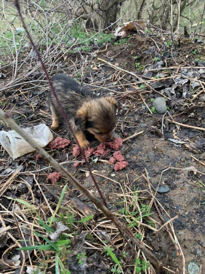 May mắn thay một chú chó con đang hấp hối ngoài bãi rác bỗng được người đàn ông tốt bụng cứu sống - Ảnh 6.