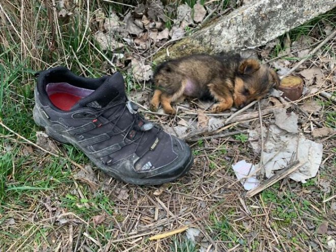 May mắn thay một chú chó con đang hấp hối ngoài bãi rác bỗng được người đàn ông tốt bụng cứu sống - Ảnh 1.