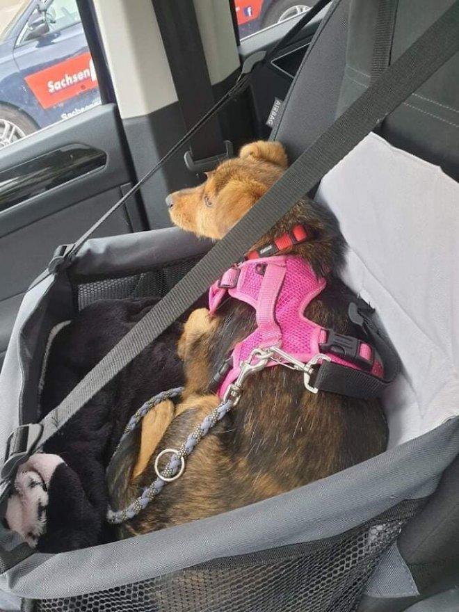 May mắn thay một chú chó con đang hấp hối ngoài bãi rác bỗng được người đàn ông tốt bụng cứu sống - Ảnh 13.