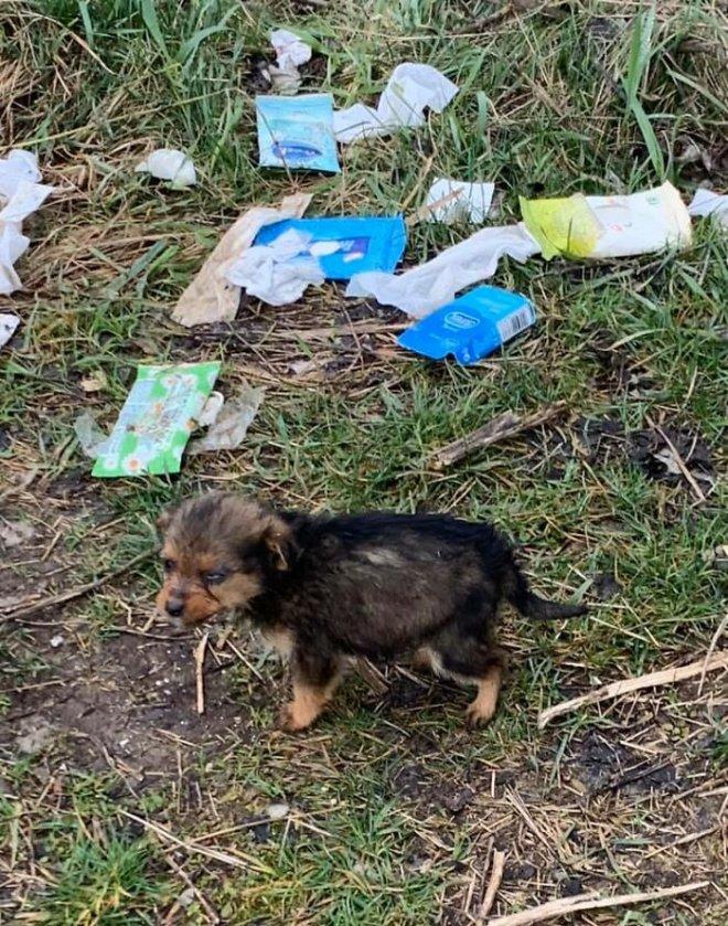 May mắn thay một chú chó con đang hấp hối ngoài bãi rác bỗng được người đàn ông tốt bụng cứu sống - Ảnh 2.