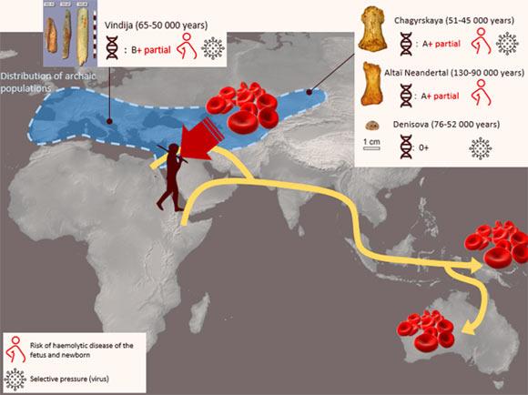 Các nhà nghiên cứu đã giải mã nhóm máu của người cổ Neanderthal và Denisovan - Ảnh 1.