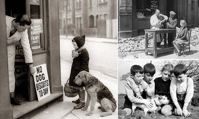 Kinh hoàng vụ thảm sát vật nuôi năm 1939 ở Anh: 750.000 thú cưng bị hóa kiếp chỉ trong 1 tuần - Ảnh 10.