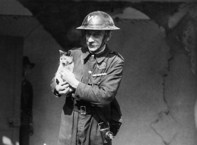 Kinh hoàng vụ thảm sát vật nuôi năm 1939 ở Anh: 750.000 thú cưng bị hóa kiếp chỉ trong 1 tuần - Ảnh 2.