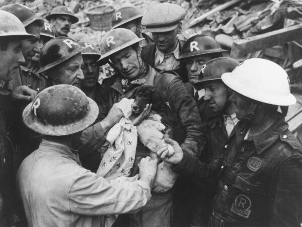 Kinh hoàng vụ thảm sát vật nuôi năm 1939 ở Anh: 750.000 thú cưng bị hóa kiếp chỉ trong 1 tuần - Ảnh 8.