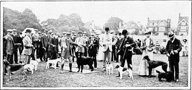 Kinh hoàng vụ thảm sát vật nuôi năm 1939 ở Anh: 750.000 thú cưng bị hóa kiếp chỉ trong 1 tuần - Ảnh 5.