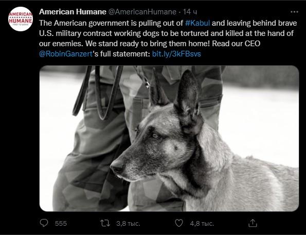 American Humane: Những con chó phục vụ bị quân đội Mỹ bỏ lại ở Afghanistan sẽ phải chịu số phận tệ hơn cái chết - Ảnh 1.