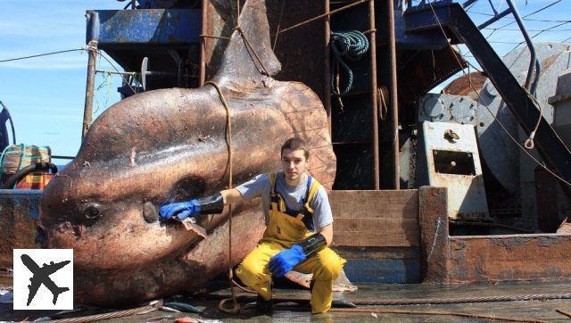 Đây là những quái vật biển sâu được một ngư dân người Nga đưa lên khỏi mặt nước - Ảnh 1.