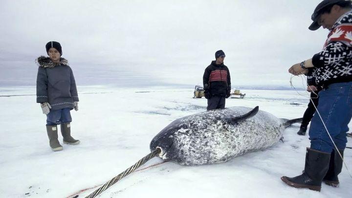 Vì ba con cá voi xám, Liên Xô và Mỹ đã bắt tay hợp tác ngay trong thời kỳ Chiến tranh Lạnh - Ảnh 1.
