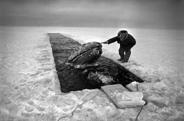 Vì ba con cá voi xám, Liên Xô và Mỹ đã bắt tay hợp tác ngay trong thời kỳ Chiến tranh Lạnh - Ảnh 5.